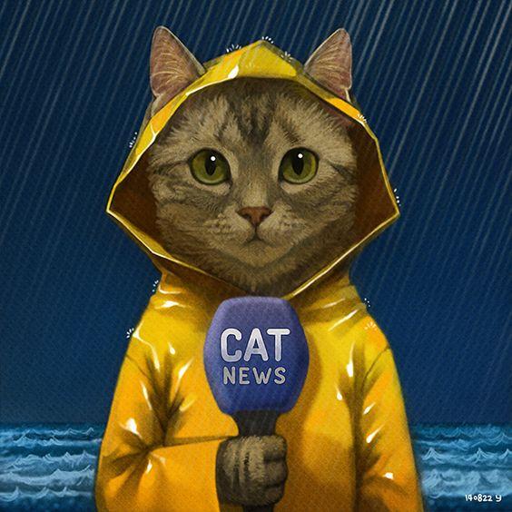 Un chat avec un ciré jaune !