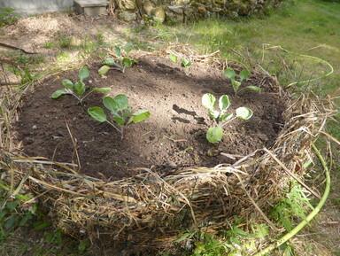 - Biodiversité : jardiner, c'est aimer la vie -