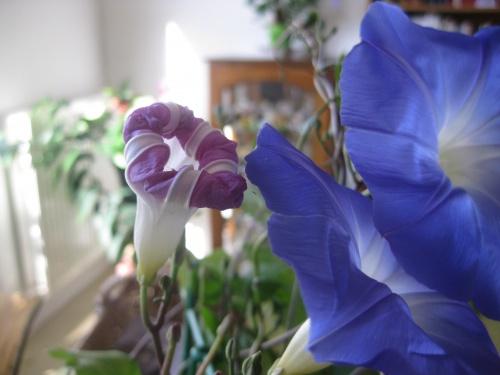 Quatre fleurs !!!