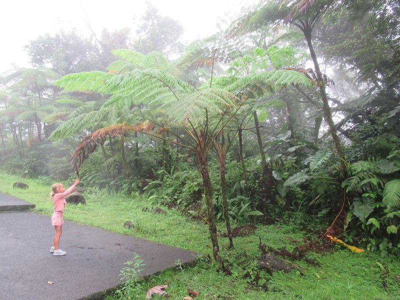 Itinéraire de 4 jours en Guadeloupe... sous la pluie : Saint-Anne, Chute du Carbet et Capesterre