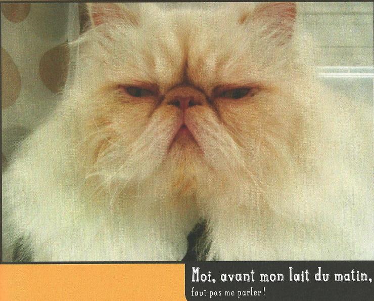 ...chats dé- confinés!
