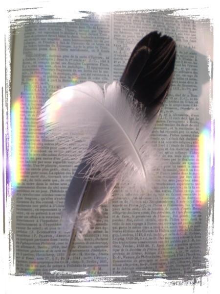 livre et plumes