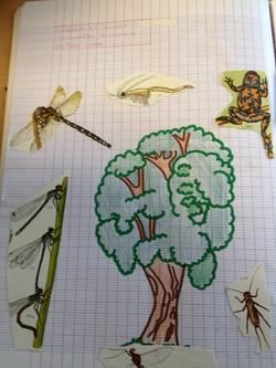 Les 6èmes illustrent la biodiversité