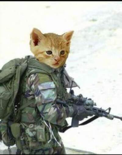 Chats antiterroristes
