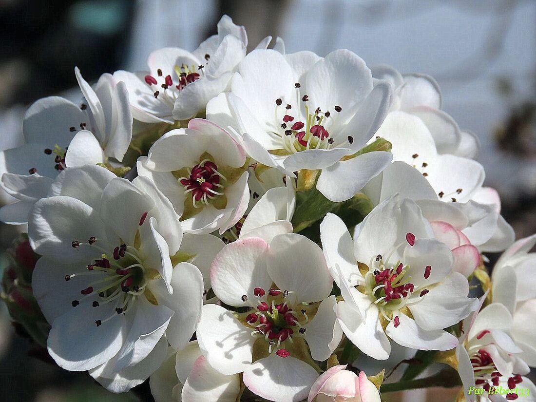 Nos fleurs du jardin - 2