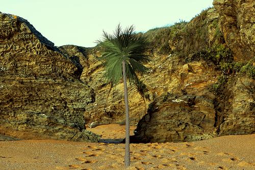 Sur la plage il y avait ...