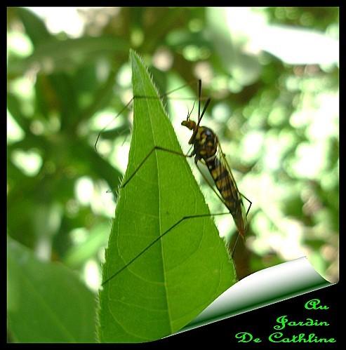 identification-bestiole-2.jpg