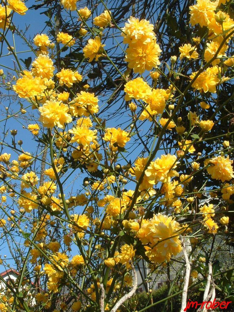 Juste quelques fleurs et ce petit lézard , histoire de saluer le soleil disparu