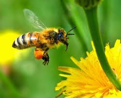 vidéo d'abeilles