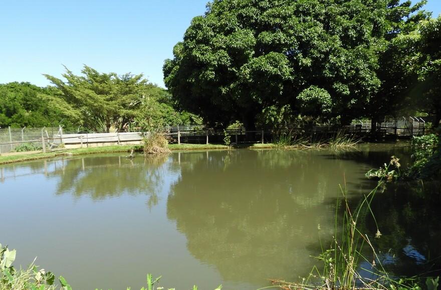 18/7/19 : Île Maurice : Casela parc zoologique (2/6) + Blagues diverses