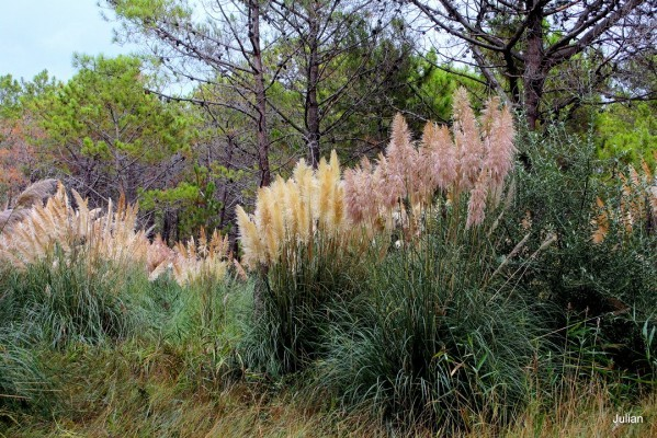 o01 - Herbes de la Pampa