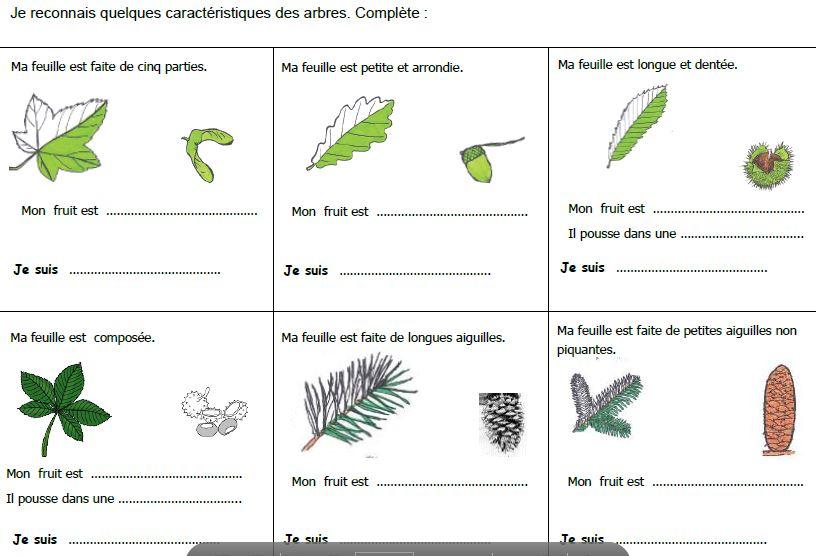 Favori Decouverte du monde : la forêt CP et CE1 - Véro à l'école KQ73