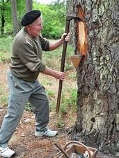 Résultat d'image pour récolte de la résine de pin. Taille: 120 x 160. Source: www.pinterest.fr