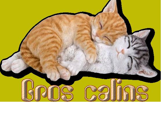 Mots du soir  chatons