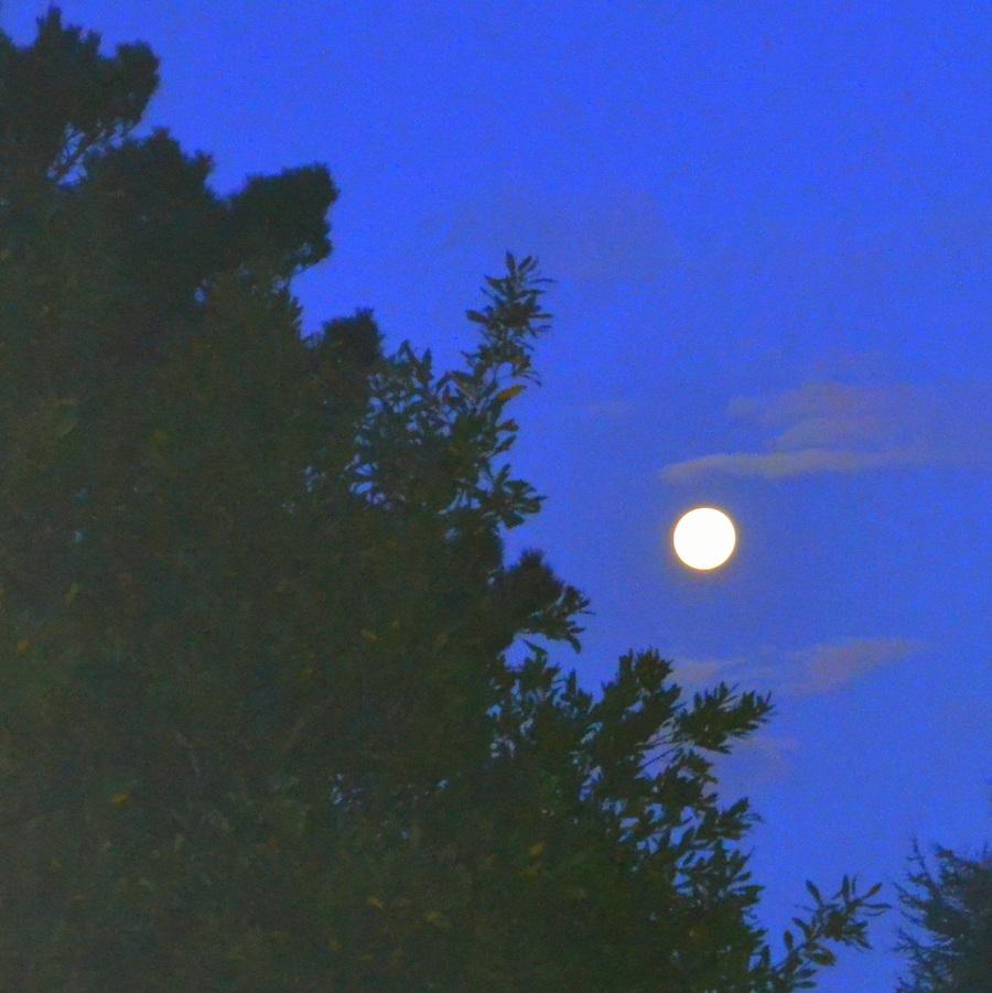 Blanche lune