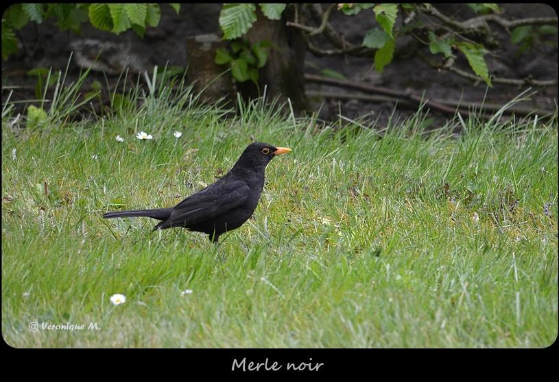 Rambouillet : Deux ans de photographies d'oiseaux