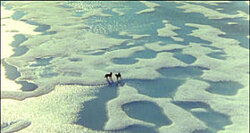 La véritable histoire d Antartica