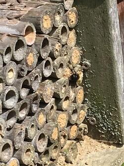 Quand les abeilles reviennent 2B