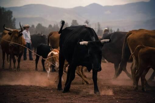 L'Union Européenne impose l'importation de 35 000 tonnes de bœuf américain ! (IC.fr-18/06/19)