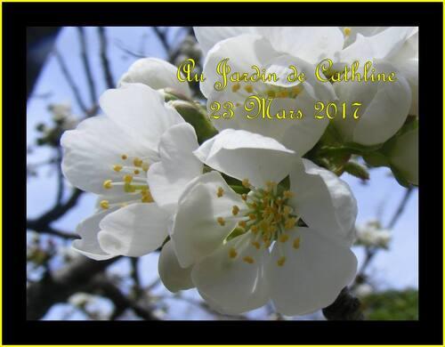 Fleurs de fruits (3)
