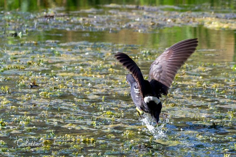 Courir sur l'eau