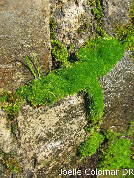 De la mousse au lichen
