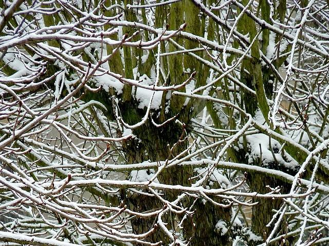Neige à Metz 5 Marc de Metz 31 01 2012