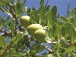 huile d argan - beauté de la peau - cosmetique bio
