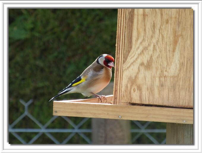 Les oiseaux de notre jardin