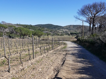 Sur la piste le long des vignes
