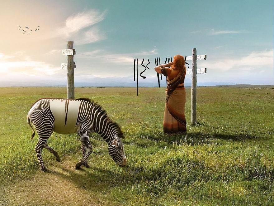 anil-zebre