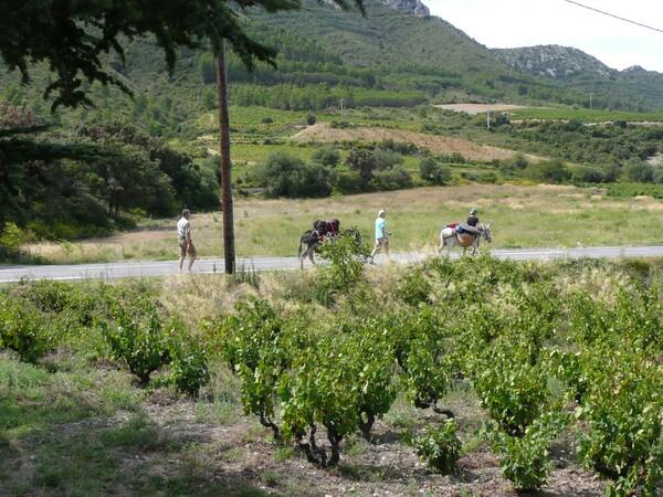 Casimir et Miguel, les ânes qui font étape au camping