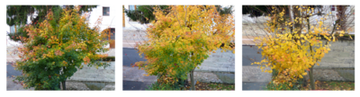 Chronique des jours d'automne - Chronicle of the autumn days