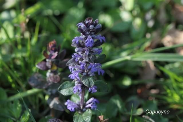 pelouse-fleurie 7230