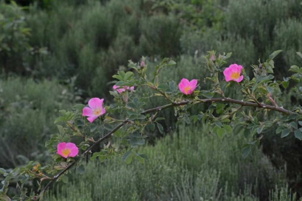 Fleurs-13 7137