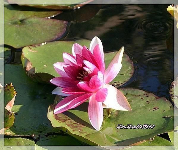 PROMENADE-FLEURIE--09-OCTOBRE-2012-N--9-.jpg