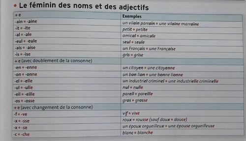 E / Le féminin : genre grammatical