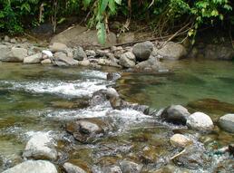 Rivière Lézarde