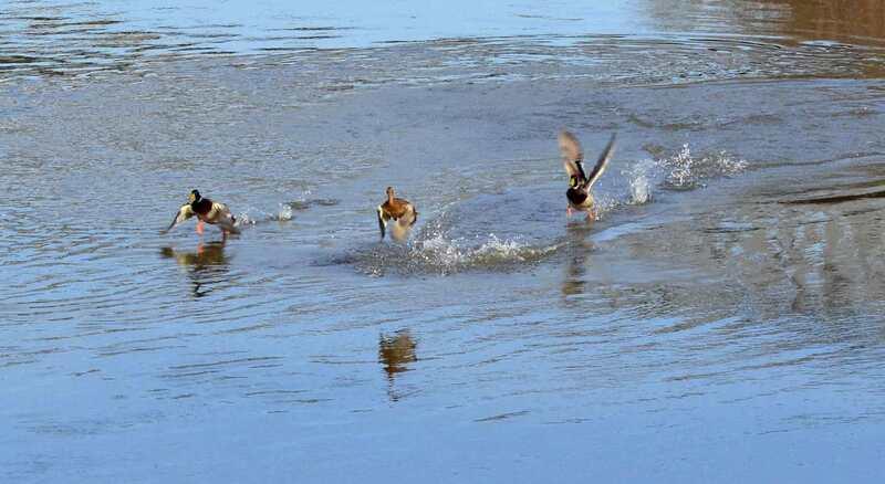 Ca y est on marche sur l'eau (agrandir pour mieux les voir)