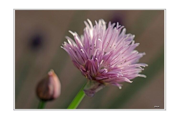Les ptites fleurs