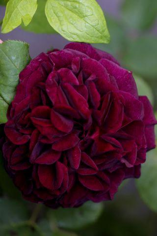 Le jardin comme exutoire (10)