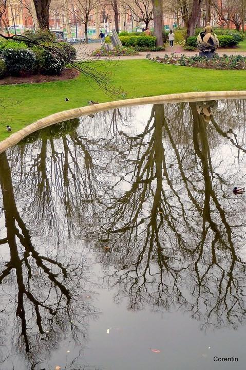 m05---Reflets-d-arbres.JPG