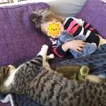 Mikado, l'oison et Morgane se reposent.