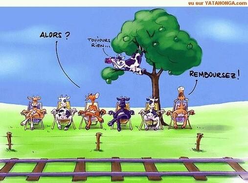 """Résultat de recherche d'images pour """"vache train"""""""