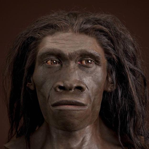 Homo habilis & homo erectus et d'autres