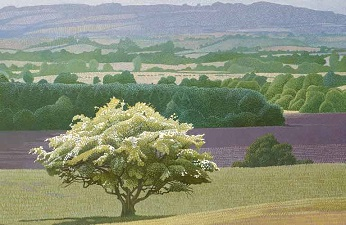 Les arbres d'Ann ...