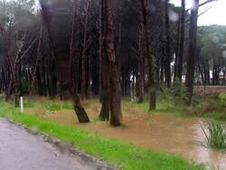 Passighjata sotta i pini - Promenade dans la pinède