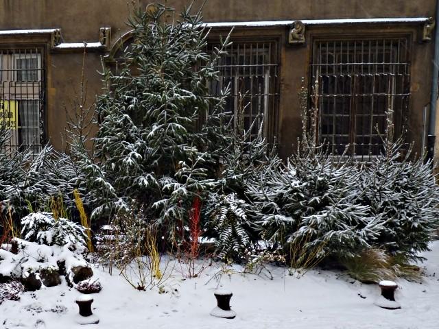Metz en hiver 3 22 12 09