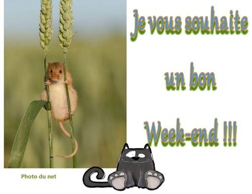 Image du week-end !!!