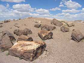 Image illustrative de l'article Parc national de Petrified Forest